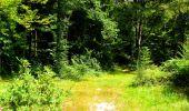 Trail Walk LONGPONT - en forêt de Retz_56_Longpont_tour du Général Mangin_AR - Photo 9