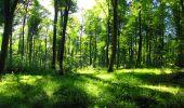 Trail Walk LONGPONT - en forêt de Retz_56_Longpont_tour du Général Mangin_AR - Photo 142