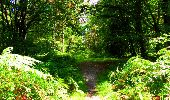 Trail Walk LONGPONT - en forêt de Retz_56_Longpont_tour du Général Mangin_AR - Photo 15