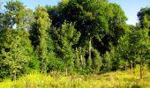 Trail Walk LONGPONT - en forêt de Retz_56_Longpont_tour du Général Mangin_AR - Photo 125
