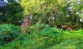 Trail Walk LONGPONT - en forêt de Retz_56_Longpont_tour du Général Mangin_AR - Photo 154