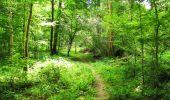 Trail Walk LONGPONT - en forêt de Retz_56_Longpont_tour du Général Mangin_AR - Photo 8