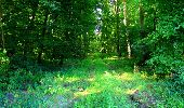 Trail Walk LONGPONT - en forêt de Retz_56_Longpont_tour du Général Mangin_AR - Photo 138