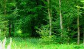 Trail Walk LONGPONT - en forêt de Retz_56_Longpont_tour du Général Mangin_AR - Photo 66