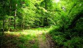 Trail Walk LONGPONT - en forêt de Retz_56_Longpont_tour du Général Mangin_AR - Photo 7