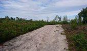 Randonnée Marche NOISY-SUR-ECOLE - pso-170802 - AchèresBéorlots-Potala - Photo 4