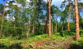 Trail Walk SAINT-JEAN-AUX-BOIS - en forêt de Compiègne_4_le vivier Corax_la Croix St-Sauveur - Photo 46