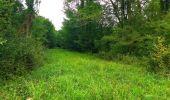 Randonnée Marche LACROIX-SAINT-OUEN - en forêt de Compiègne_35_la Croix Saint-Sauveur_le Ru du Goderu - Photo 95
