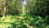 Trail Walk SAINT-JEAN-AUX-BOIS - en forêt de Compiègne_4_le vivier Corax_la Croix St-Sauveur - Photo 36