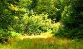 Trail Walk SAINT-JEAN-AUX-BOIS - en forêt de Compiègne_4_le vivier Corax_la Croix St-Sauveur - Photo 24