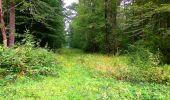 Randonnée Marche LACROIX-SAINT-OUEN - en forêt de Compiègne_35_la Croix Saint-Sauveur_le Ru du Goderu - Photo 106