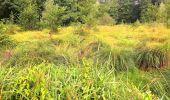 Trail Walk SAINT-JEAN-AUX-BOIS - en forêt de Compiègne_4_le vivier Corax_la Croix St-Sauveur - Photo 5