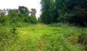 Trail Walk SAINT-JEAN-AUX-BOIS - en forêt de Compiègne_4_le vivier Corax_la Croix St-Sauveur - Photo 40