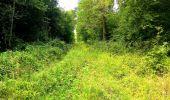 Trail Walk SAINT-JEAN-AUX-BOIS - en forêt de Compiègne_4_le vivier Corax_la Croix St-Sauveur - Photo 38