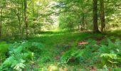 Trail Walk SAINT-JEAN-AUX-BOIS - en forêt de Compiègne_4_le vivier Corax_la Croix St-Sauveur - Photo 35