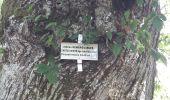 Randonnée Marche GRENDELBRUCH - Le Guirbaden, le plus grand des châteaux forts - Photo 16