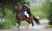 Trail Equestrian Libramont-Chevigny - Circuit 5 - Lambermont, dernier conducteur de diligence - Photo 22
