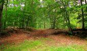 Randonnée Marche SAINT-JEAN-AUX-BOIS - en forêt de Compiègne_6_les Grands Monts_la route tournante sur la tête St-Jean - Photo 173