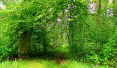 Randonnée Marche SAINT-JEAN-AUX-BOIS - en forêt de Compiègne_6_les Grands Monts_la route tournante sur la tête St-Jean - Photo 150