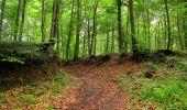 Randonnée Marche SAINT-JEAN-AUX-BOIS - en forêt de Compiègne_6_les Grands Monts_la route tournante sur la tête St-Jean - Photo 20