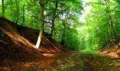Randonnée Marche SAINT-JEAN-AUX-BOIS - en forêt de Compiègne_6_les Grands Monts_la route tournante sur la tête St-Jean - Photo 105