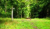 Randonnée Marche SAINT-JEAN-AUX-BOIS - en forêt de Compiègne_6_les Grands Monts_la route tournante sur la tête St-Jean - Photo 82