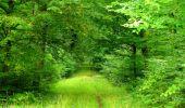 Randonnée Marche SAINT-JEAN-AUX-BOIS - en forêt de Compiègne_6_les Grands Monts_la route tournante sur la tête St-Jean - Photo 64