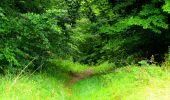 Randonnée Marche SAINT-JEAN-AUX-BOIS - en forêt de Compiègne_6_les Grands Monts_la route tournante sur la tête St-Jean - Photo 46
