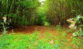 Randonnée Marche SAINT-JEAN-AUX-BOIS - en forêt de Compiègne_6_les Grands Monts_la route tournante sur la tête St-Jean - Photo 139