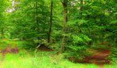 Randonnée Marche SAINT-JEAN-AUX-BOIS - en forêt de Compiègne_6_les Grands Monts_la route tournante sur la tête St-Jean - Photo 126