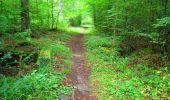 Randonnée Marche SAINT-JEAN-AUX-BOIS - en forêt de Compiègne_6_les Grands Monts_la route tournante sur la tête St-Jean - Photo 3