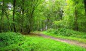 Randonnée Marche SAINT-JEAN-AUX-BOIS - en forêt de Compiègne_6_les Grands Monts_la route tournante sur la tête St-Jean - Photo 55