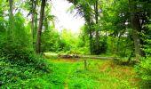 Randonnée Marche SAINT-JEAN-AUX-BOIS - en forêt de Compiègne_6_les Grands Monts_la route tournante sur la tête St-Jean - Photo 152