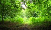 Randonnée Marche SAINT-JEAN-AUX-BOIS - en forêt de Compiègne_6_les Grands Monts_la route tournante sur la tête St-Jean - Photo 5