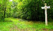 Randonnée Marche SAINT-JEAN-AUX-BOIS - en forêt de Compiègne_6_les Grands Monts_la route tournante sur la tête St-Jean - Photo 81