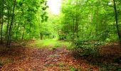 Randonnée Marche SAINT-JEAN-AUX-BOIS - en forêt de Compiègne_6_les Grands Monts_la route tournante sur la tête St-Jean - Photo 129