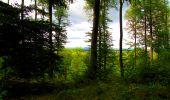 Randonnée Marche SAINT-JEAN-AUX-BOIS - en forêt de Compiègne_6_les Grands Monts_la route tournante sur la tête St-Jean - Photo 183