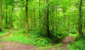 Randonnée Marche SAINT-JEAN-AUX-BOIS - en forêt de Compiègne_6_les Grands Monts_la route tournante sur la tête St-Jean - Photo 56