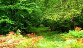 Randonnée Marche SAINT-JEAN-AUX-BOIS - en forêt de Compiègne_6_les Grands Monts_la route tournante sur la tête St-Jean - Photo 76