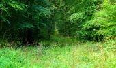 Randonnée Marche SAINT-JEAN-AUX-BOIS - en forêt de Compiègne_6_les Grands Monts_la route tournante sur la tête St-Jean - Photo 87
