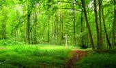 Randonnée Marche SAINT-JEAN-AUX-BOIS - en forêt de Compiègne_6_les Grands Monts_la route tournante sur la tête St-Jean - Photo 58