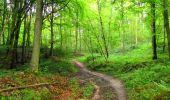 Randonnée Marche SAINT-JEAN-AUX-BOIS - en forêt de Compiègne_6_les Grands Monts_la route tournante sur la tête St-Jean - Photo 49
