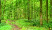 Randonnée Marche SAINT-JEAN-AUX-BOIS - en forêt de Compiègne_6_les Grands Monts_la route tournante sur la tête St-Jean - Photo 57