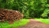 Randonnée Marche SAINT-JEAN-AUX-BOIS - en forêt de Compiègne_6_les Grands Monts_la route tournante sur la tête St-Jean - Photo 95