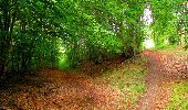 Randonnée Marche SAINT-JEAN-AUX-BOIS - en forêt de Compiègne_6_les Grands Monts_la route tournante sur la tête St-Jean - Photo 174