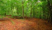 Randonnée Marche SAINT-JEAN-AUX-BOIS - en forêt de Compiègne_6_les Grands Monts_la route tournante sur la tête St-Jean - Photo 130