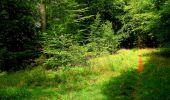 Randonnée Marche SAINT-JEAN-AUX-BOIS - en forêt de Compiègne_6_les Grands Monts_la route tournante sur la tête St-Jean - Photo 176