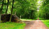 Randonnée Marche SAINT-JEAN-AUX-BOIS - en forêt de Compiègne_6_les Grands Monts_la route tournante sur la tête St-Jean - Photo 94