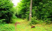 Randonnée Marche SAINT-JEAN-AUX-BOIS - en forêt de Compiègne_6_les Grands Monts_la route tournante sur la tête St-Jean - Photo 132