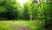 Randonnée Marche SAINT-JEAN-AUX-BOIS - en forêt de Compiègne_6_les Grands Monts_la route tournante sur la tête St-Jean - Photo 78